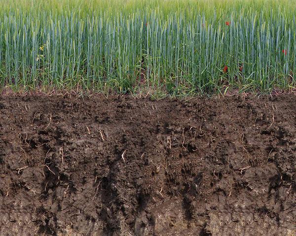 Querschnitt von Erdboden mit Grasbewuchs